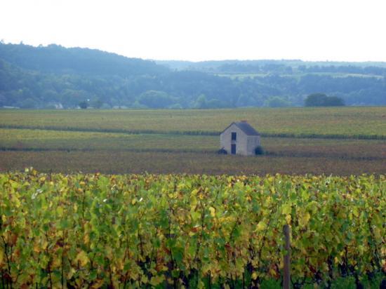 Bourgogne Rouge